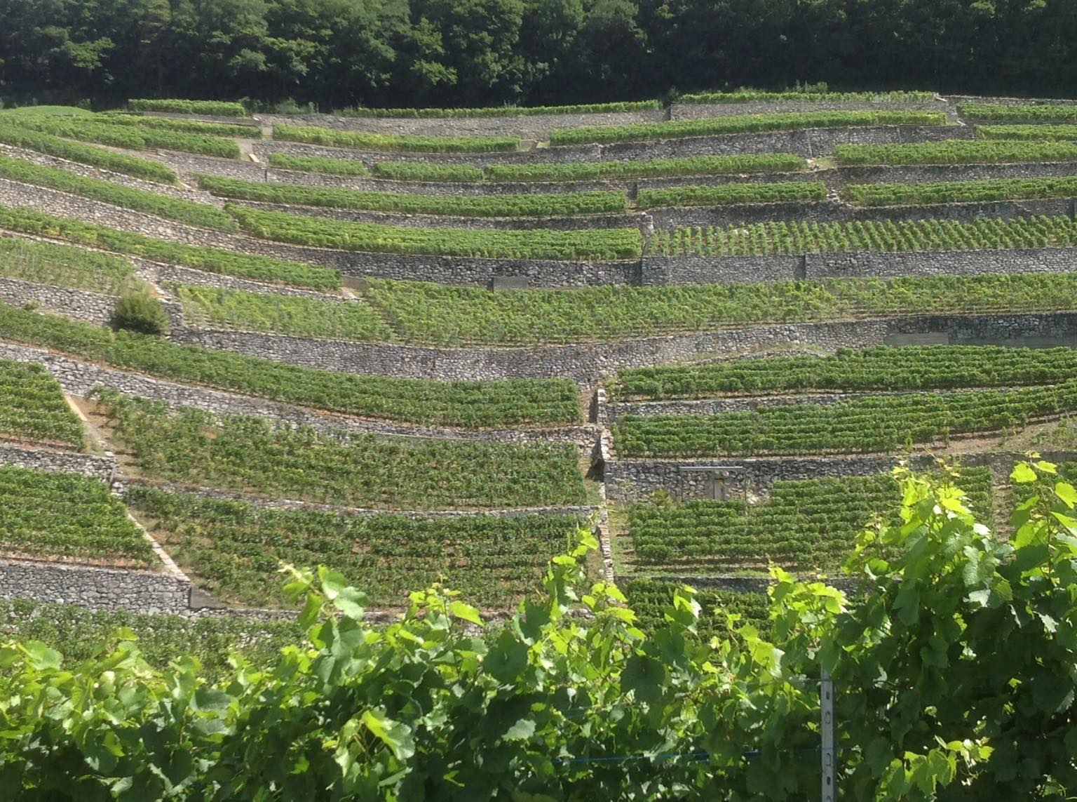 Leading wine regions advocate for elimination of tariffs and non-tariff barriers