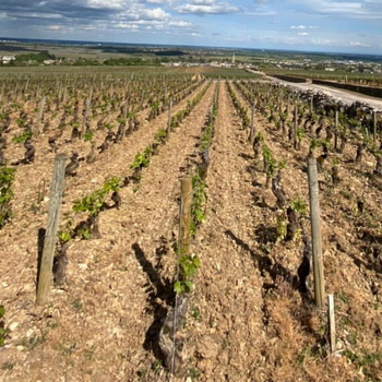 Discovering Bourgogne wines, 19th Century