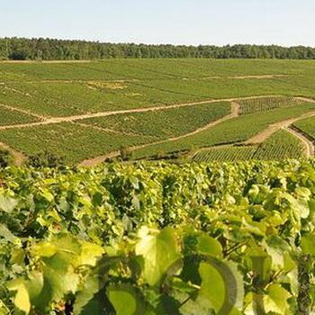 Bourgogne appellations